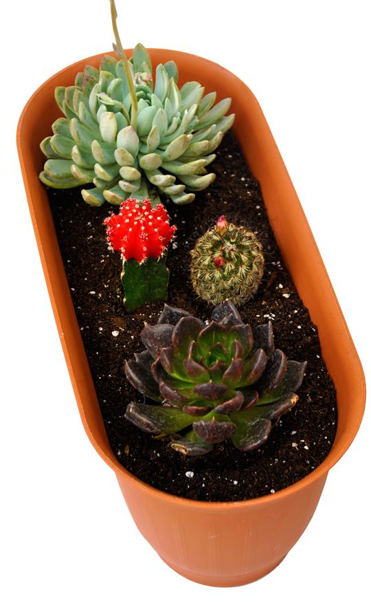 DIY Desert Garden
