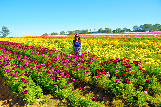 5 Things Your Kids Will Learn At The Flower Fields At